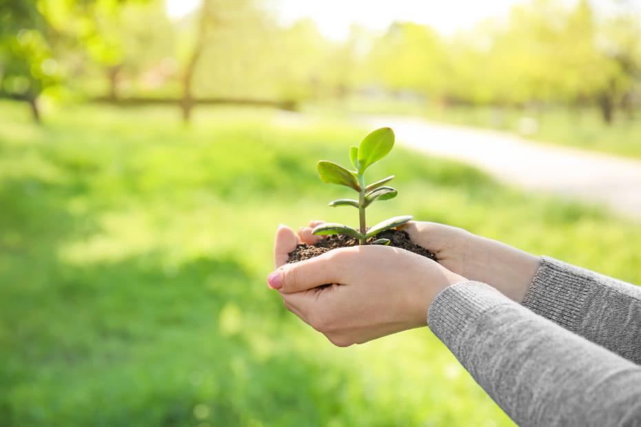 写真:人の手と植物の苗